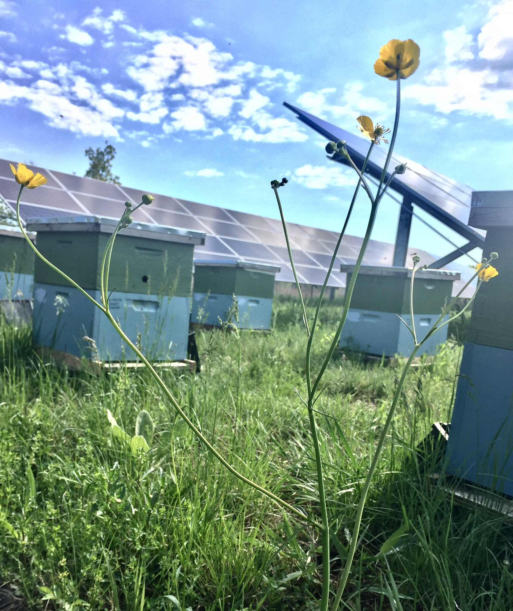 CleanChoice Energy Partnership Helps Support Healthy Habitat for Bees on Solar Farms